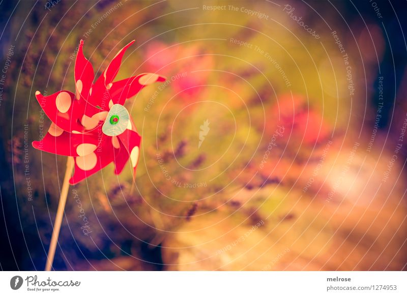 Kindheit Lifestyle elegant Stil Natur Pflanze Sommer Schönes Wetter Blume Sträucher Blüte Wildpflanze Topfpflanze Mohn Gras Lavendel Garten Kinderspielzeug