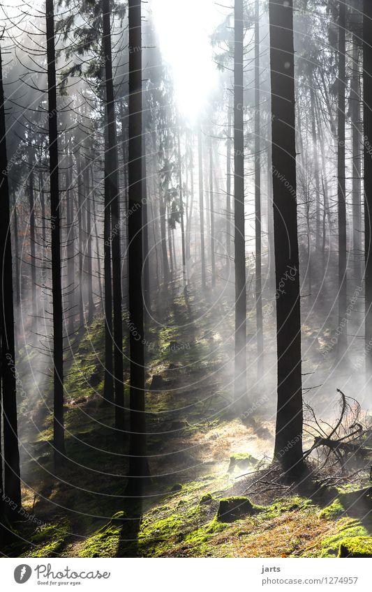 mystik Umwelt Natur Landschaft Sonnenaufgang Sonnenuntergang Schönes Wetter Nebel Pflanze Baum Gras Wald hell natürlich Gelassenheit geduldig ruhig Hoffnung