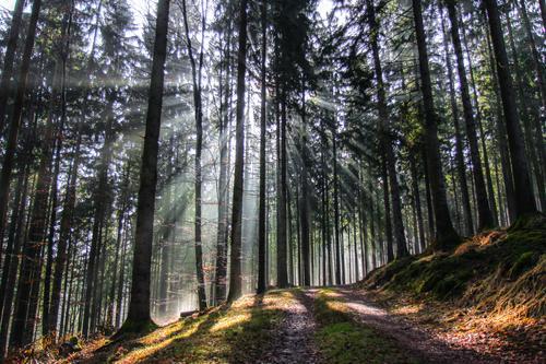 wegweiser Natur Pflanze schön Baum Landschaft ruhig Wald Umwelt Wege & Pfade natürlich hell frisch Schönes Wetter Hoffnung Gelassenheit geduldig