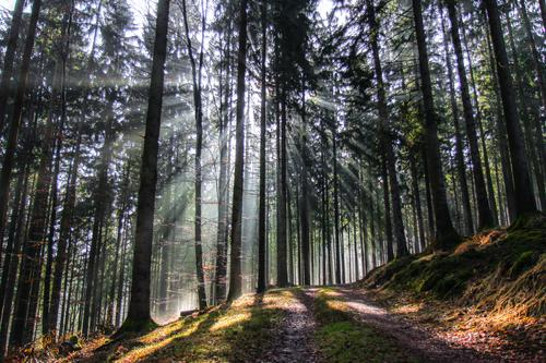 wegweiser Umwelt Natur Landschaft Pflanze Schönes Wetter Baum Wald Wege & Pfade frisch hell natürlich schön Gelassenheit geduldig ruhig Hoffnung Spessart