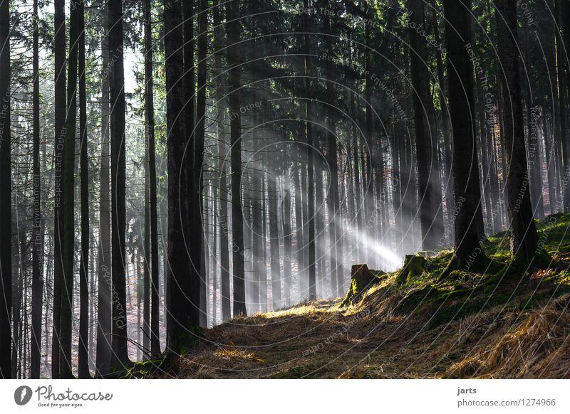 einsicht Umwelt Natur Landschaft Pflanze Sonnenaufgang Sonnenuntergang Frühling Herbst Schönes Wetter Baum Gras Wald Wege & Pfade frisch hell natürlich