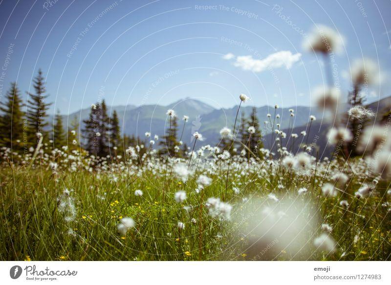 Alpenwiese Natur blau Pflanze grün Sommer Blume Landschaft Umwelt Frühling Wiese natürlich Schönes Wetter