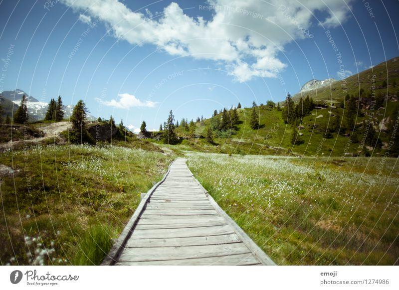 im Grünen Umwelt Natur Landschaft Himmel Frühling Sommer Herbst Schönes Wetter Wiese Hügel Berge u. Gebirge natürlich blau grün wandern Fußweg Tourismus Schweiz