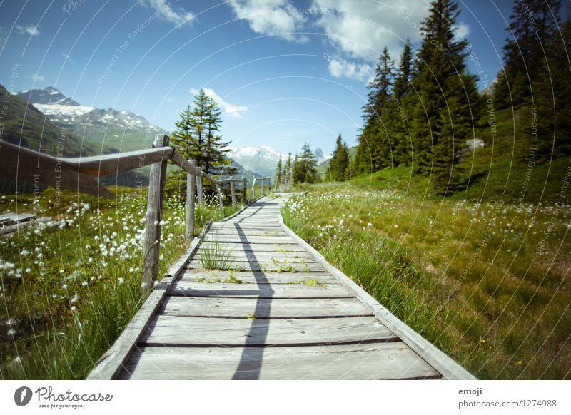 Wanderweg Umwelt Natur Landschaft Sommer Schönes Wetter Wiese Feld Alpen natürlich grün Fußweg Wege & Pfade Steg Schweiz Wanderausflug Ausflugsziel Vals