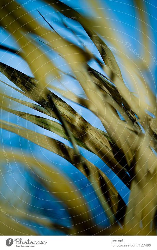 Gräser Halm Blüte Gräserblüte Gras Grasland Detailaufnahme Hintergrundbild Stengel Schilfrohr Samen grassamen Riedgras Pflanze Botanik Natur wild Küste Seeufer