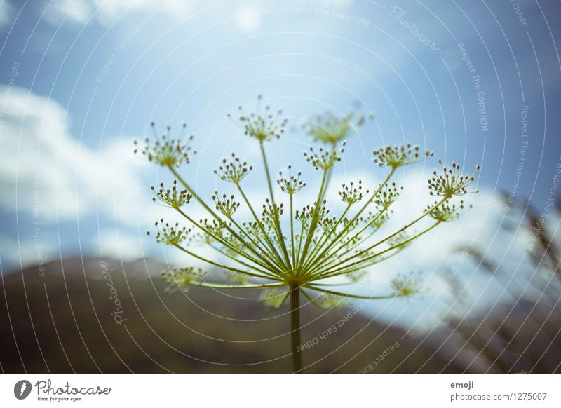 Pünktchen Natur Pflanze blau grün Sommer natürlich Sträucher Schönes Wetter