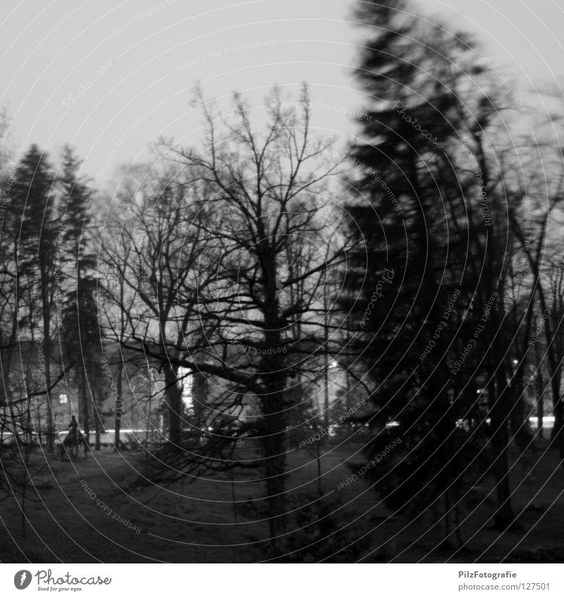 Emma 2 Sturm Baum Zaun schwarz weiß gebeugt extrem Unwetter Holz kaputt umfallen gefährlich Todesangst Spitze Baumkrone Wolken Wohnsiedlung Pferd Statue