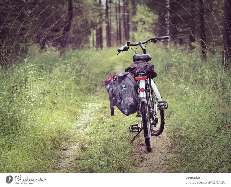 radius erweitern Natur grün Sommer Erholung Landschaft Freude Wald Wege & Pfade Freiheit Freizeit & Hobby Tourismus wandern Fahrrad Fitness Fahrradtour fahren