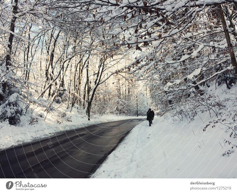 Schneelandschaft mit Straße wandern 1 Mensch Natur Landschaft Winter Wetter Schönes Wetter Eis Frost Baum Wald München Allee Fußgänger laufen grau weiß