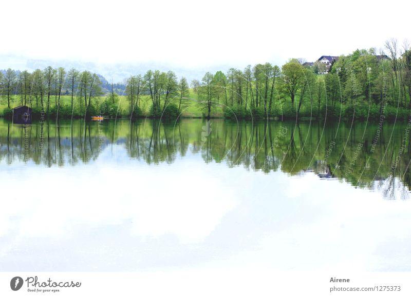 eins zu eins Landschaft Wald Seeufer Hütte Bootshaus Fischerboot Ruderboot Schwimmen & Baden einfach natürlich grün Zufriedenheit trösten ruhig Einsamkeit Natur