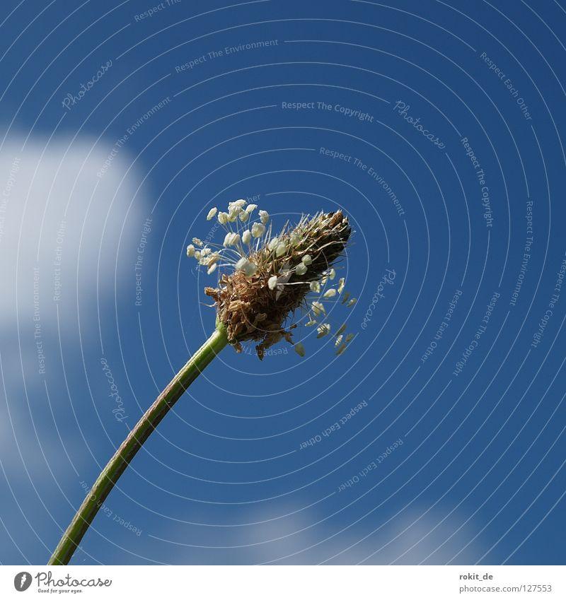 Nasenreiniger? Himmel blau grün Blume Wolken Wiese Gras Blüte Gesundheit dreckig Reinigen Blühend Stengel drehen obskur einrichten