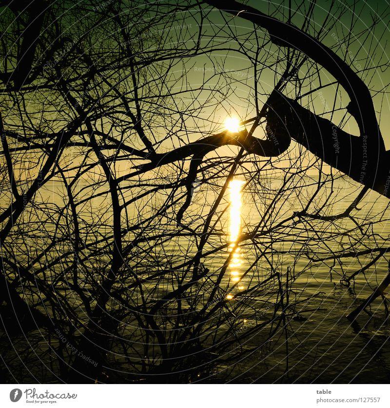 Märchenland Wasser Baum Sonne Winter Wärme Küste See Beleuchtung Wellen wandern Spaziergang Physik Weide Quadrat Gewässer spukhaft