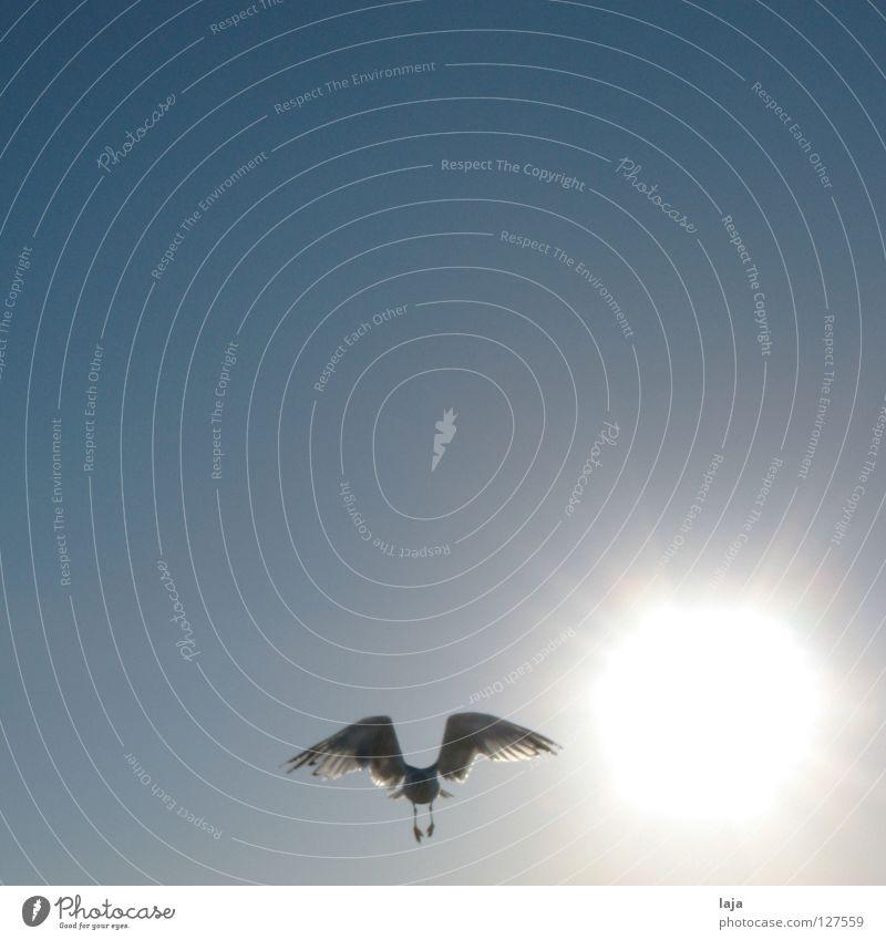 Wie Phönix aus der ... Sonne Himmel Sonne Meer blau Sommer Strand Freiheit Vogel fliegen Luftverkehr Flügel Schönes Wetter Möwe