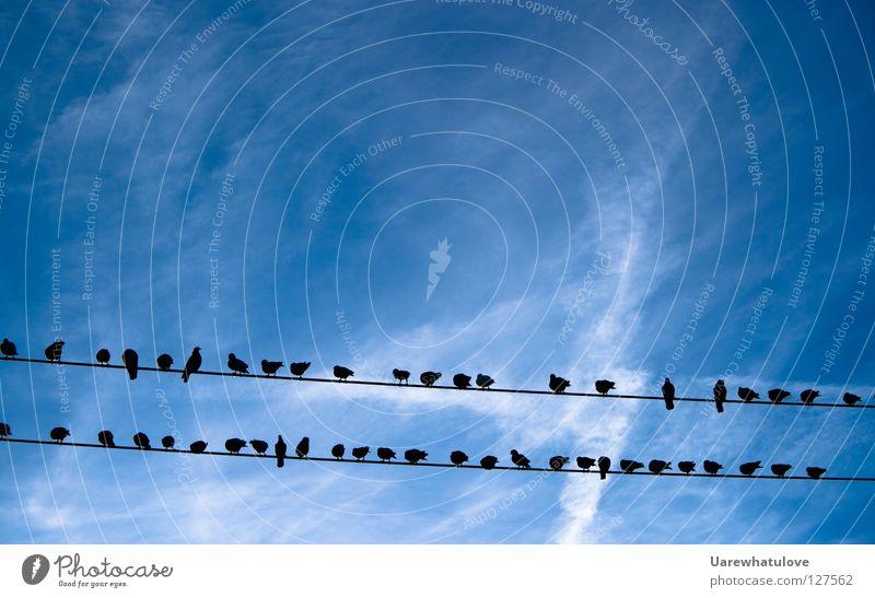 Sontags Tauben - Himmels Zuschauer Himmel blau ruhig Wolken Erholung oben Linie 2 Zusammensein Vogel fliegen Elektrizität mehrere Pause Kabel beobachten
