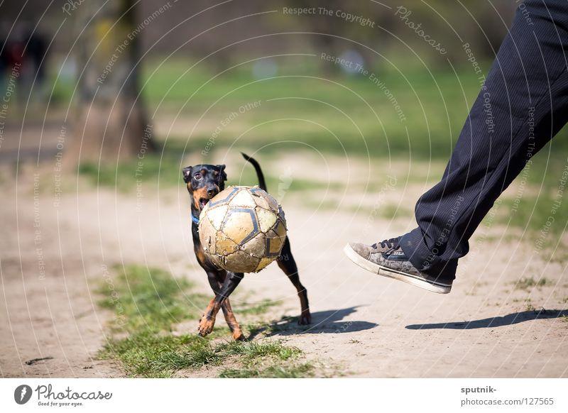 zensiert Hund Sport Spielen Beine Ball Schuss
