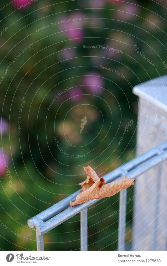 das herbstzeitlos Sommer Blatt blau braun grün silber Stimmung Zaun Metall kalt Tod welk Strukturen & Formen Stab Herbst Herbstlaub Farbfoto Außenaufnahme