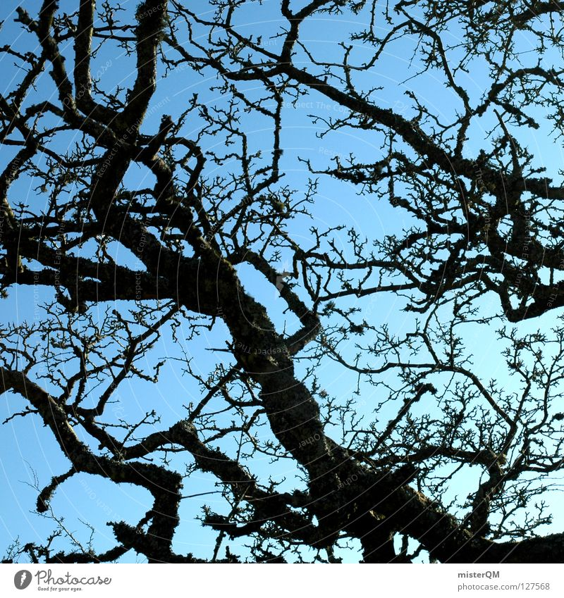 black out the sun. Himmel Natur blau Baum Blatt dunkel Herbst See Zeit Kraft Wachstum gefährlich Macht Schönes Wetter bedrohlich Dinge