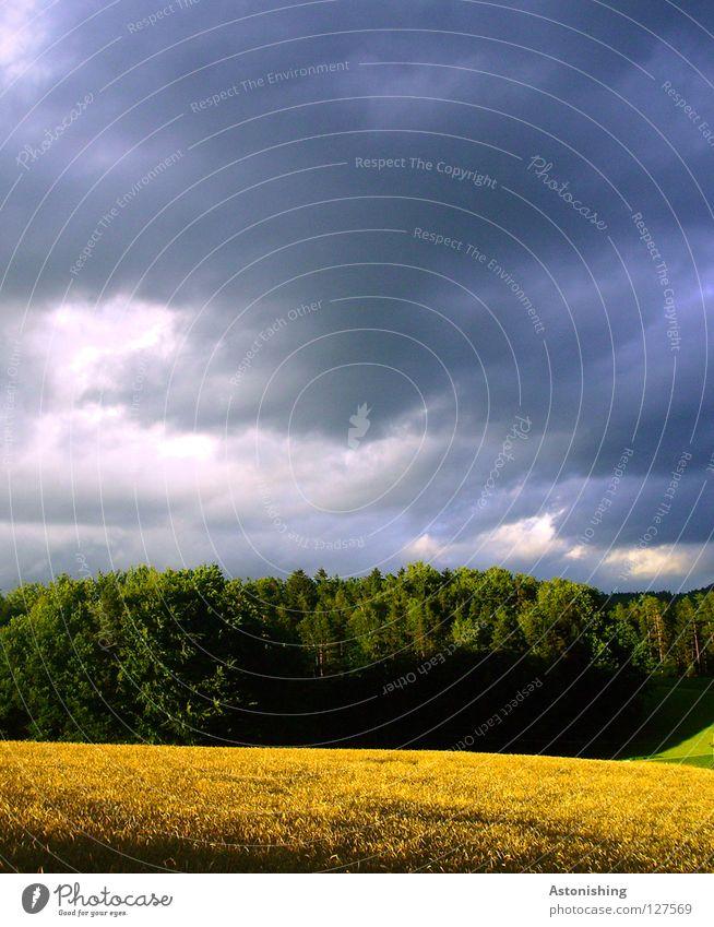 die Ruhe vor dem Sturm ruhig Landschaft Himmel Wolken Wetter Baum Wiese Feld Wald dunkel hell Farbe Schatten Menschenleer Regenwolken Sonnenlicht gelb