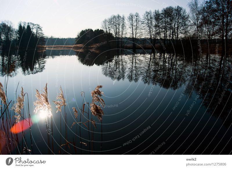 Stiller See Umwelt Natur Landschaft Pflanze Wasser Wolkenloser Himmel Horizont Klima Wetter Schönes Wetter Baum Sträucher Zweige u. Äste Wald Röhricht leuchten