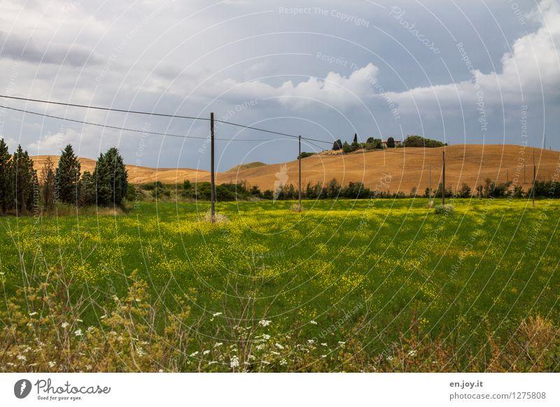 nachhaltig Himmel Natur Ferien & Urlaub & Reisen Pflanze Sommer Landschaft Gesunde Ernährung Umwelt Wiese Gras Energiewirtschaft Feld Wachstum Italien Hügel
