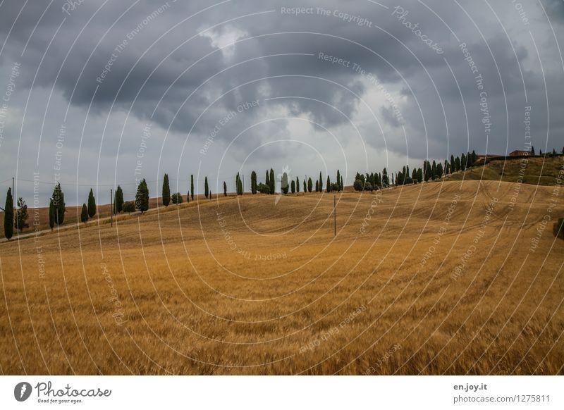 Straßenführung Himmel Natur Ferien & Urlaub & Reisen Sommer Landschaft Gesunde Ernährung Umwelt Feld Wachstum Idylle Klima Italien Hügel Landwirtschaft Unwetter