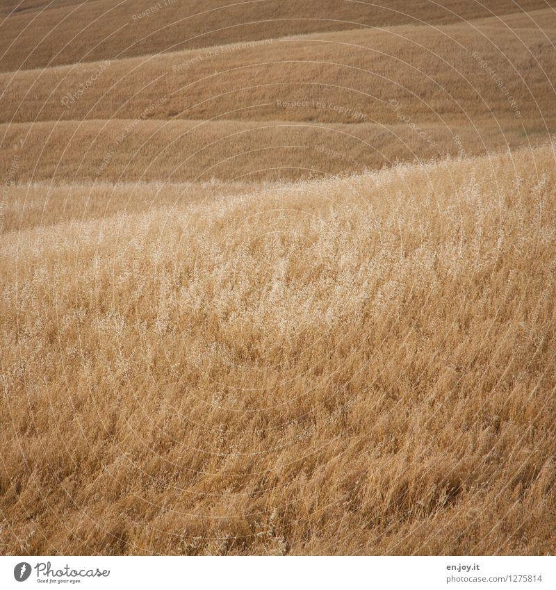 gewellt Natur Ferien & Urlaub & Reisen Sommer Erholung Landschaft ruhig Gesunde Ernährung Umwelt gelb Feld Wachstum Wellen Klima Italien Hügel Landwirtschaft