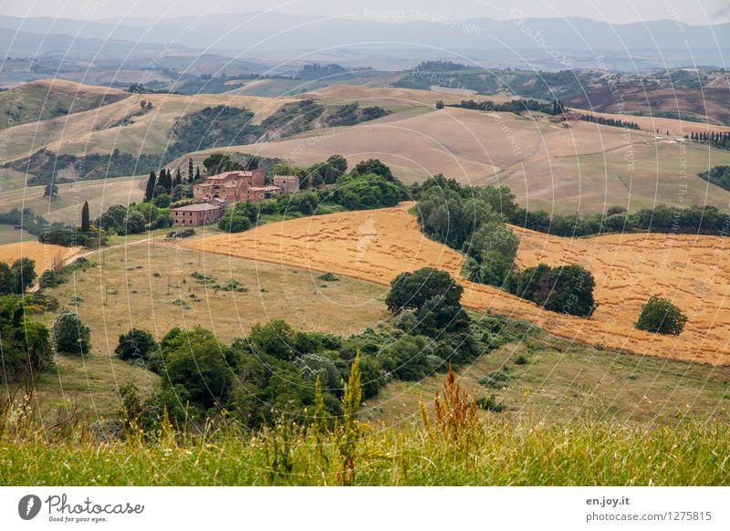 Landhaus Natur Ferien & Urlaub & Reisen Pflanze Sommer Landschaft Ferne Umwelt Wiese Horizont Tourismus Feld Wachstum Idylle Ausflug Klima Italien