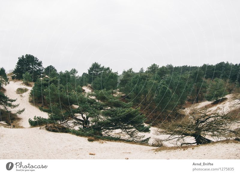 Düne Ausflug Natur Landschaft Sand Himmel Wolken Baum Sträucher Wald Hügel Küste Strand Nordsee Stranddüne Dünengras gelb grau grün Niederlande Farbfoto