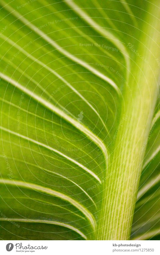 Close-up of a palm leaf Design Ferien & Urlaub & Reisen Tourismus Sommerurlaub Natur Tier Pflanze Palme grün Hintergrundbild beautiful decoration freshness