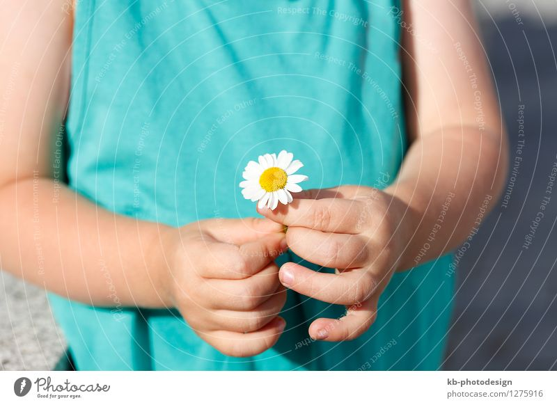 Small girl with a beautiful daisy Sommer Kind feminin Kleinkind Hand 1 Mensch 1-3 Jahre Natur Pflanze Blume springen gelb flower agriculture bloom sun organic