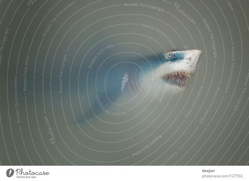 Der Weiße Hai II weiß blau grau Angst klein groß Fisch Aktion gefährlich Gebiss bedrohlich Spitze Appetit & Hunger böse Schifffahrt Panik