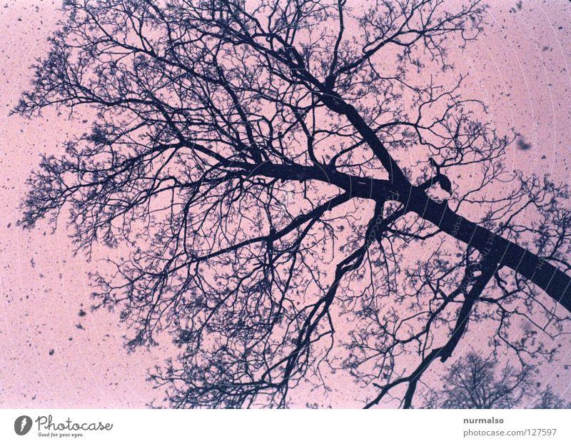 Pink Snow Baum rosa Märchen vorlesen Hinterhof Allee Winter kalt Blatt laublos Flocke Schneefall frieren Mantel Mütze Schal Schneemann Schneeballschlacht