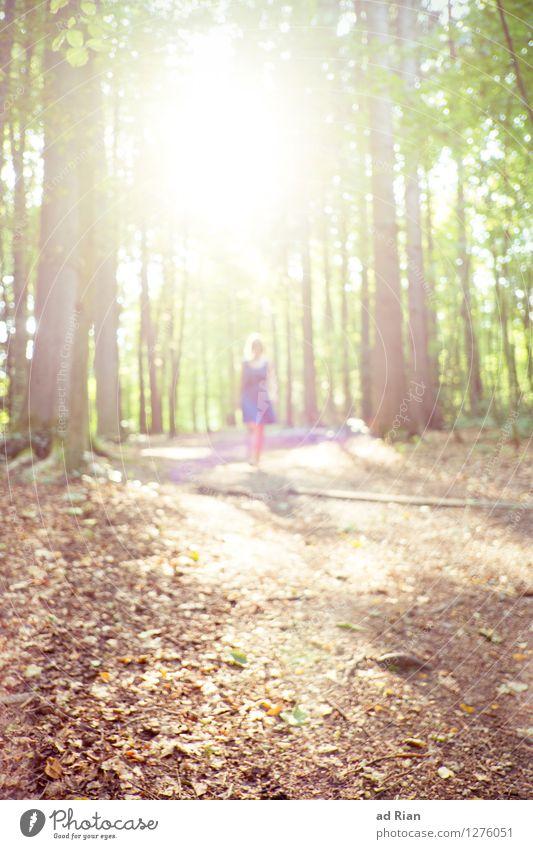 out of the light. elegant Stil Leben wandern Mensch feminin Frau Erwachsene 1 Natur Landschaft Pflanze Tier Sonne Sonnenlicht Sommer Schönes Wetter Baum