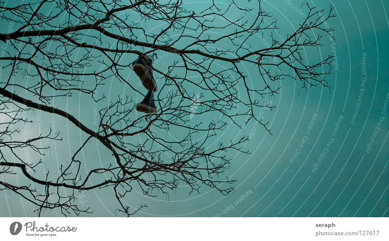 Schuhbaum Schuhe Baum Ast hängen Symbole & Metaphern Zeichen Hinweis Kultur kultig Turnschuh Himmel aufhängen werfen Schuhbänder Geäst Hintergrundbild Baumkrone