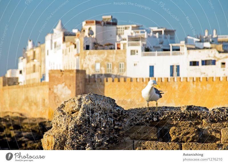 """""""Wo ist die Stadt?"""" Himmel Natur alt blau weiß Haus Tier Fenster Umwelt Wand Küste Mauer braun Vogel Fassade"""
