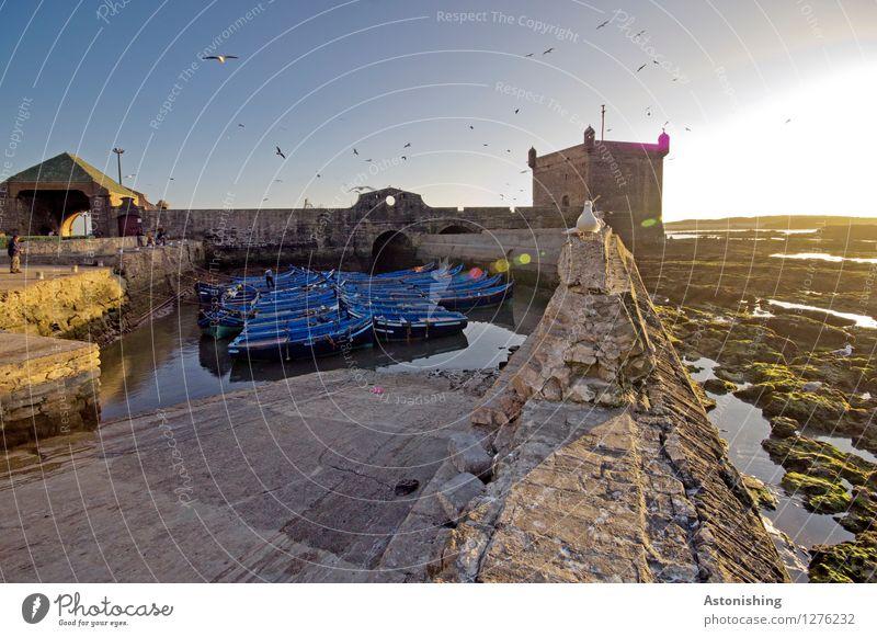 Abend in Essaouira Mensch Himmel Natur Stadt blau Wasser Sonne Tier Umwelt Wand Küste Gebäude Mauer fliegen Stein Vogel