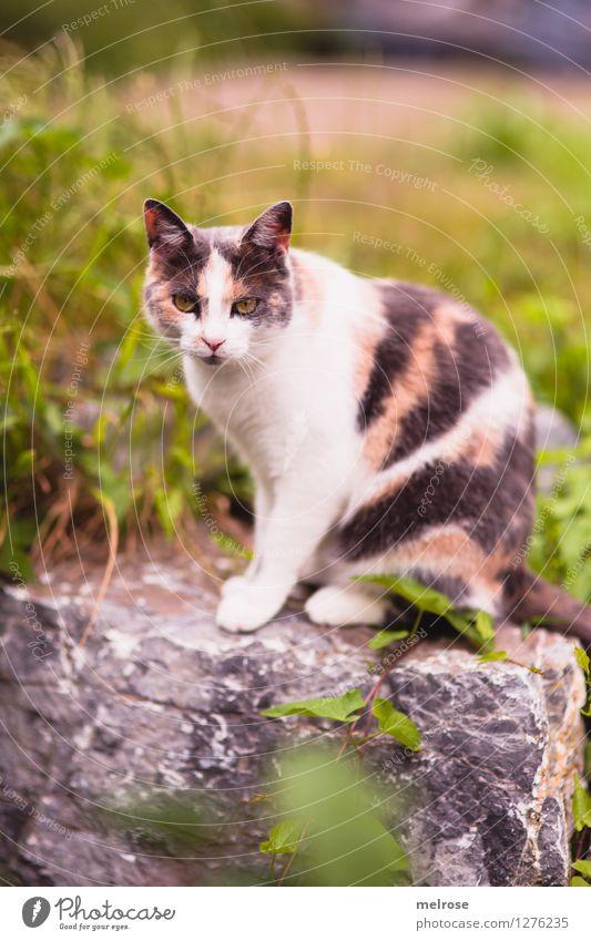 """"""" Topmodel """" Katze Natur grün schön Sommer weiß Erholung Blatt Tier Gras Stil grau Garten braun Zufriedenheit elegant"""