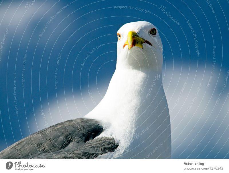 noch eine Möwe Himmel Natur blau Sommer weiß Wolken Tier Reisefotografie Umwelt gelb Auge grau Vogel hell Kopf Wetter