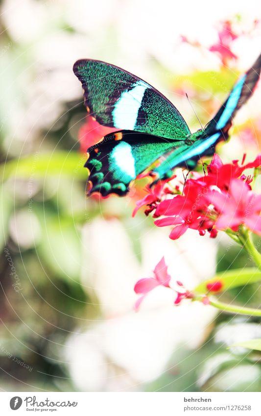 exot Natur Pflanze Tier Frühling Sommer Schönes Wetter Blume Sträucher Blatt Blüte Garten Park Wiese Wildtier Schmetterling Flügel 1 Blühend Duft Erholung