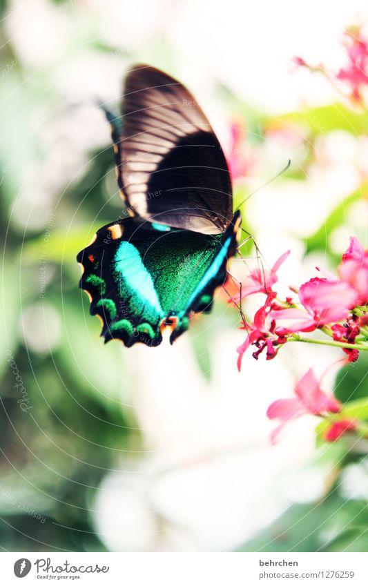 grüner schwalbenschwanz für glückimwinkl Natur Pflanze schön Sommer Blume Erholung Blatt Tier Blüte Frühling Wiese außergewöhnlich Garten fliegen Park elegant