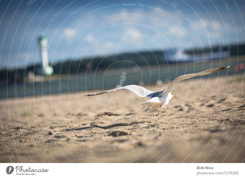 ...abgehoben! Himmel Natur Ferien & Urlaub & Reisen blau weiß Meer Wolken Tier Strand Umwelt natürlich Küste Vogel Sand Horizont Tourismus