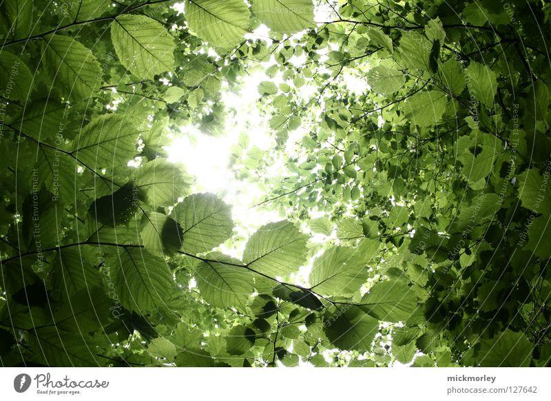 sit down and relax Natur schön Sonne Sommer Blatt Farbe Wald springen Frühling Erde frisch Wachstum Spaziergang Ast Blühend Digitalfotografie