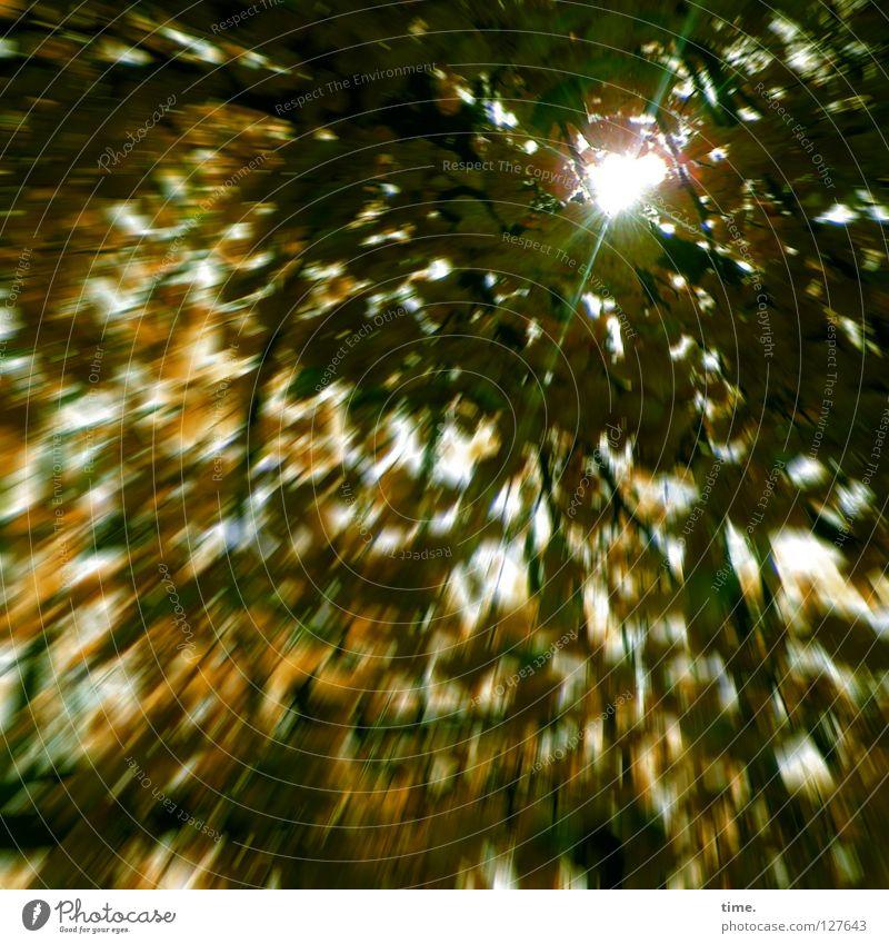 Die Sonne findet immer einen Weg, sagt Lukas Baum Blatt Herbst oben Beleuchtung leer Ast Vergänglichkeit Loch Baumkrone Lücke Lichtstrahl