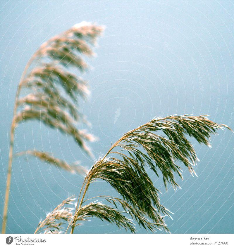 Windbreaker Himmel Natur grün blau Herbst Gras Küste See braun Feld Sturm Korn Ähren Brise Strukturen & Formen