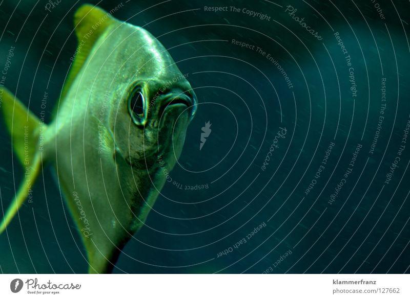 Klammerfisch frischt fische franze Wasser Fisch Wissenschaften Wiederholung Informationstechnologie Willkommen Kennwort Hallo Reim