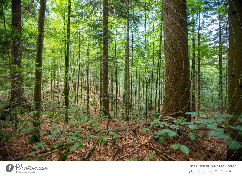 Wald Umwelt Natur Landschaft Pflanze Luft Baum Sträucher Moos Blatt braun grau grün schwarz weiß Boden Außenaufnahme Spaziergang Ast Farbfoto Menschenleer