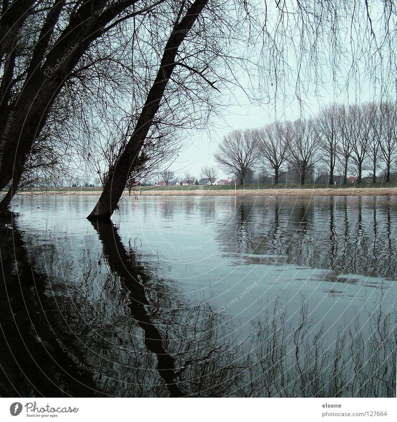 ::ELBSTRAND:: Baum Holz Holzmehl Geäst nass See Strand grau Winter Riesa Wasser Ast Fluss Küste Natur Landschaft Elbe elsone