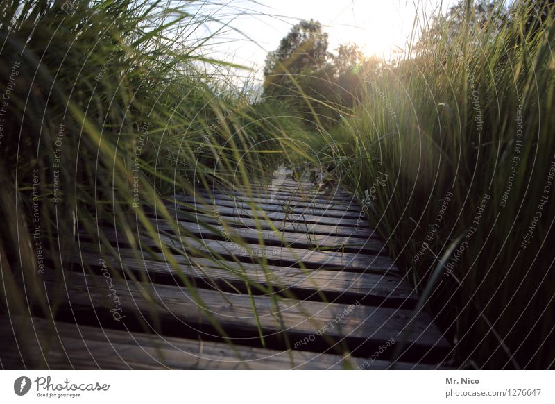 wir machen den weg frei Natur Ferien & Urlaub & Reisen Pflanze grün Sommer Landschaft ruhig Umwelt Frühling Gras Wege & Pfade natürlich Freizeit & Hobby wild Tourismus wandern