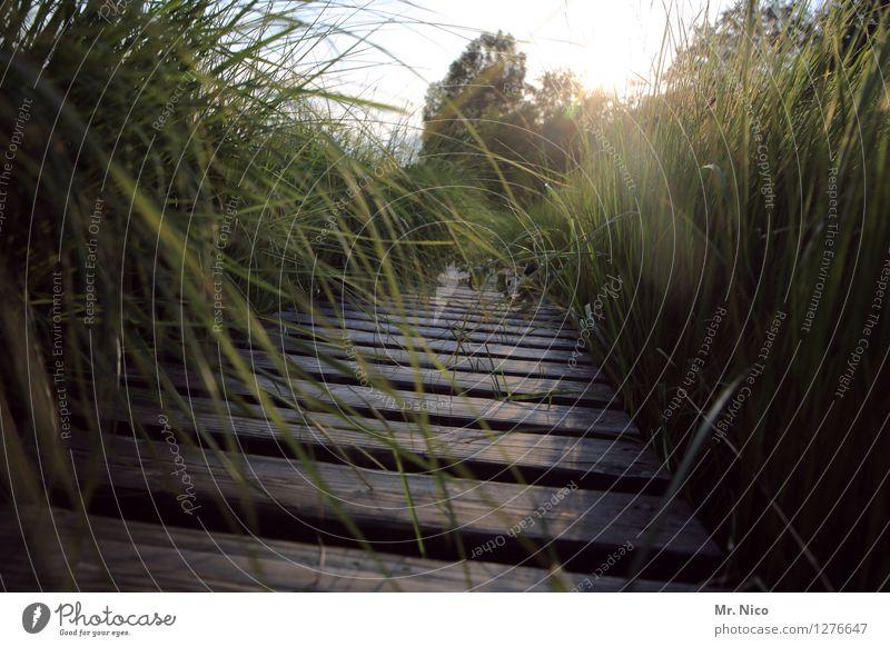 wir machen den weg frei ruhig Freizeit & Hobby Ferien & Urlaub & Reisen Tourismus Ausflug Umwelt Natur Landschaft Schönes Wetter Pflanze Gras Sträucher
