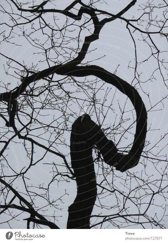 Gedankenfänger Himmel Winter schwarz grau trist Ast Gedanke Baumkrone Zweig durcheinander Geäst